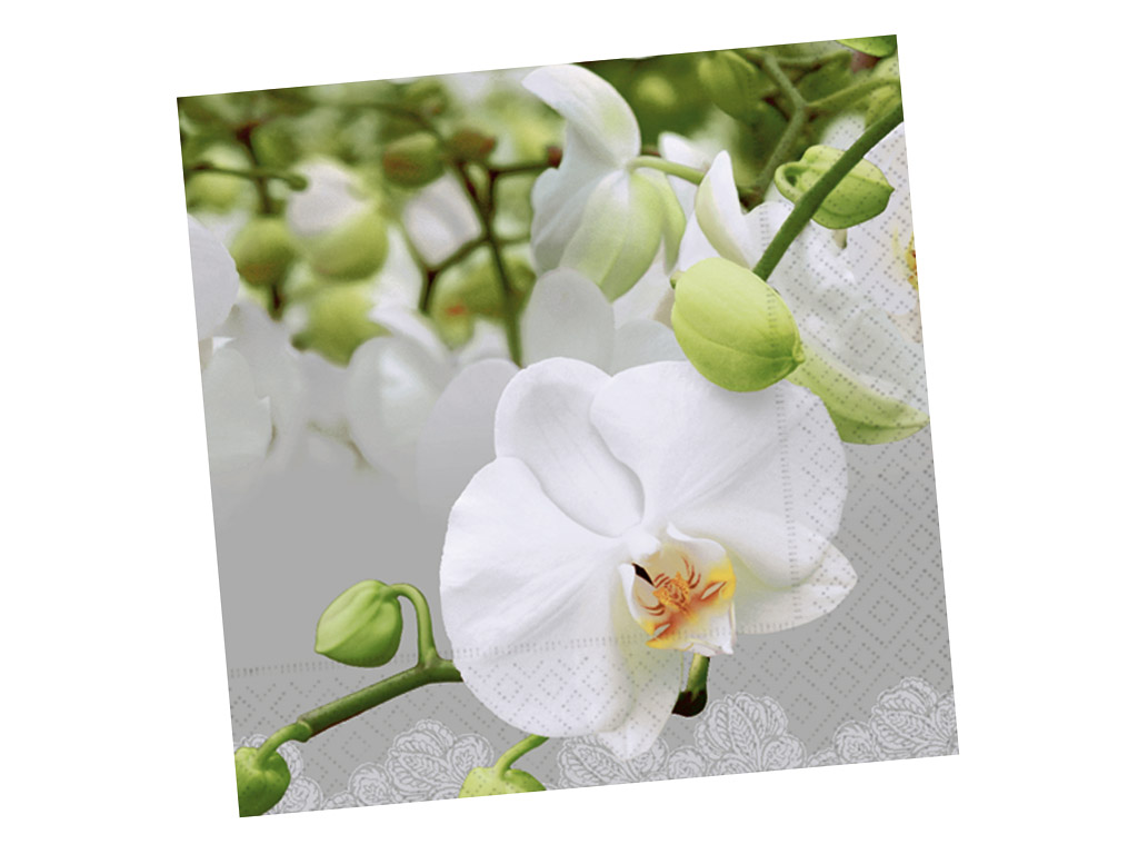 Servetėlės 33x33cm 20vnt. 3 sluoksnių Orchid Festival