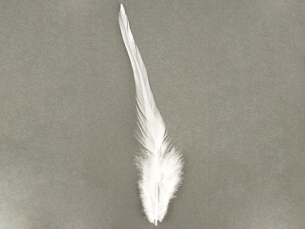 Decorative feathers Rayher Trendy 10-15cm 2g white