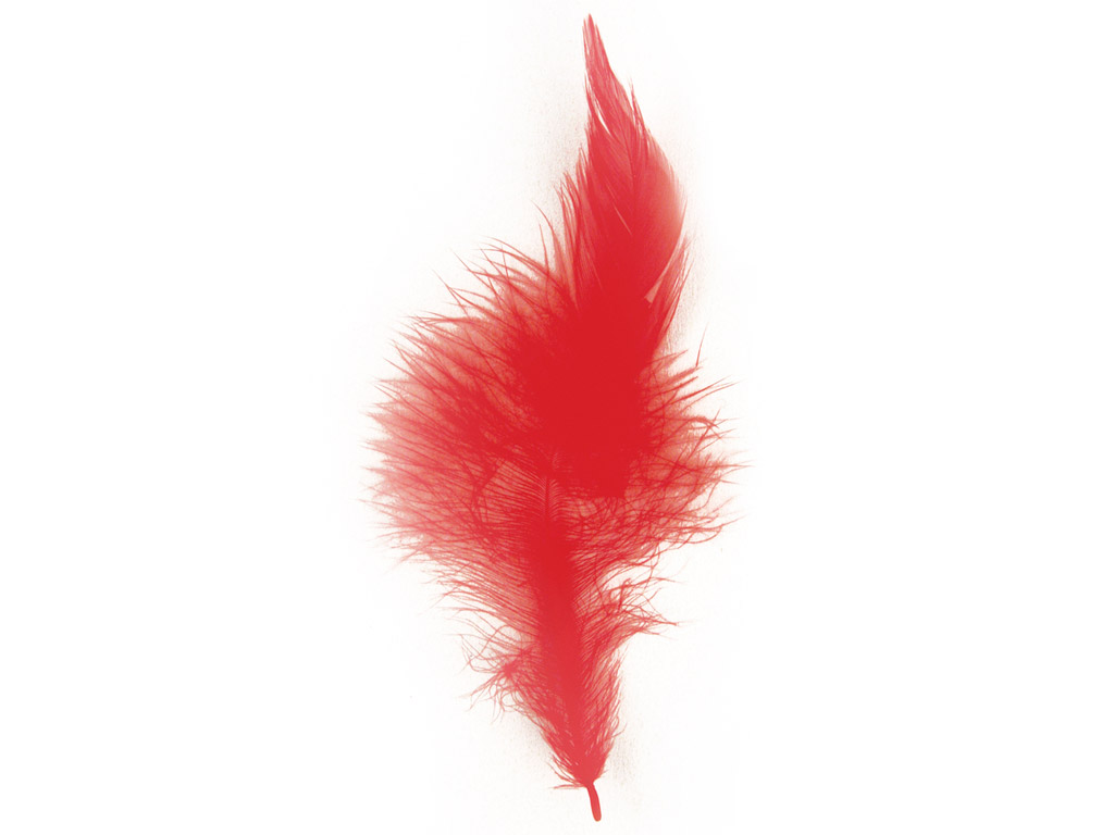 Decorative feathers Rayher Trendy 10-15cm 2g red