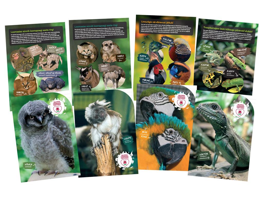 Vihik Tallinna Loomaaed 12 lehte 16 joont assortii