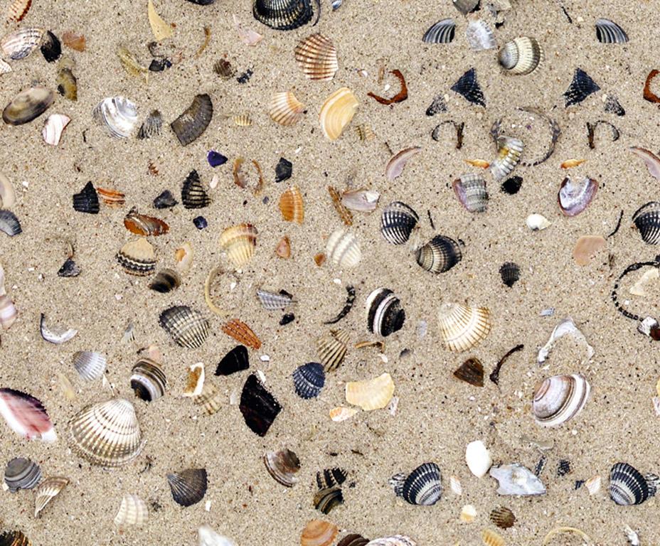 Kartong pildiga Ursus 49.5x68cm/300g Shells